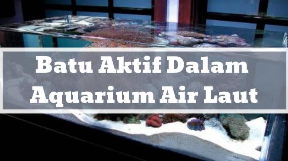 Fungsi Batu Aktif Dalam Aquarium Air Laut