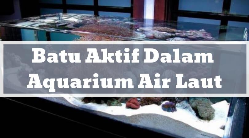 Batu Aktif Dalam Aquarium Air Laut