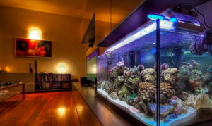 Cara Setup Aquarium Air Laut