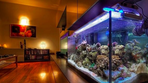 Cara Setup Aquarium Air Laut yang Benar