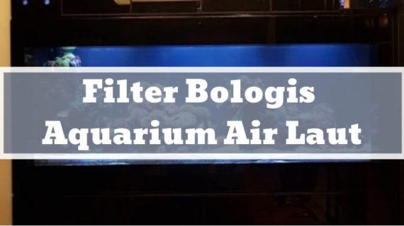 Kelebihan dan Kekurangan Filter Bologis pada Aquarium Air Laut