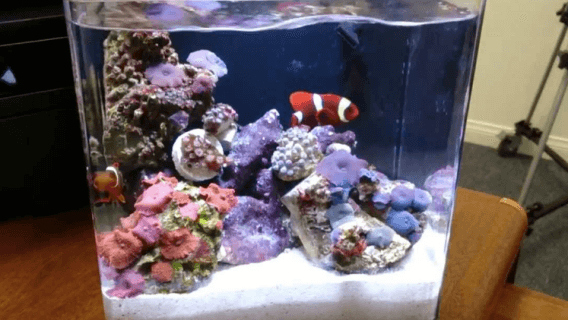 Inilah Perbedaan Antara Aquarium Air Laut dan Tawar