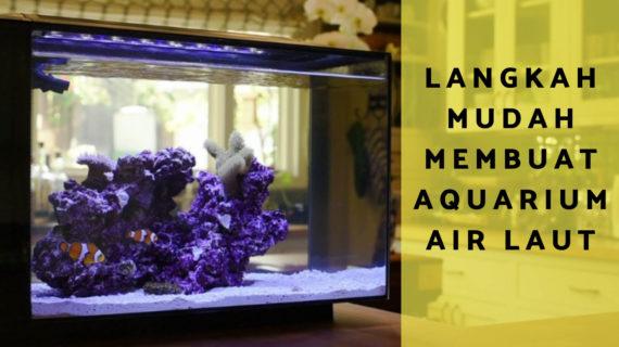 Inilah Langkah Mudah Membuat Aquarium Air Laut Untuk Pemula