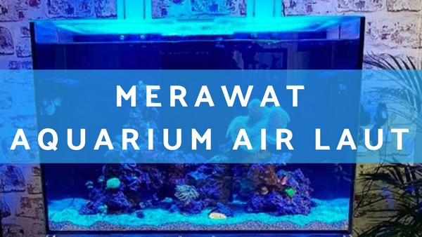 Merawat Aquarium Air Laut