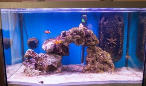 Model Aquarium Air Laut Fish Only Tank (FO)