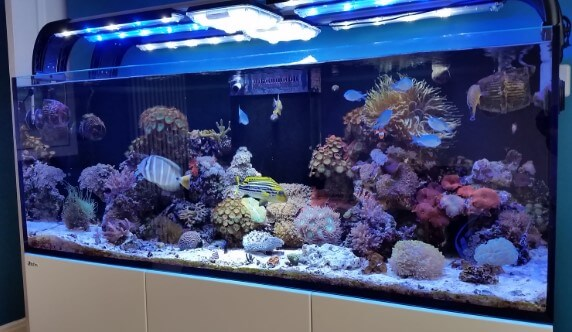 Model Aquarium Air Laut Mixed Reef Tank