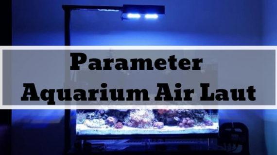 Apa Saja Parameter Aquarium Air Laut yang Baik? Baca Artikel Ini