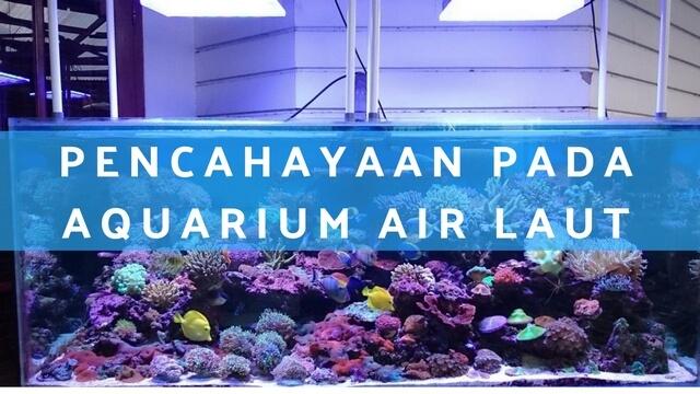 Pencahayaan Pada Aquarium Air Laut
