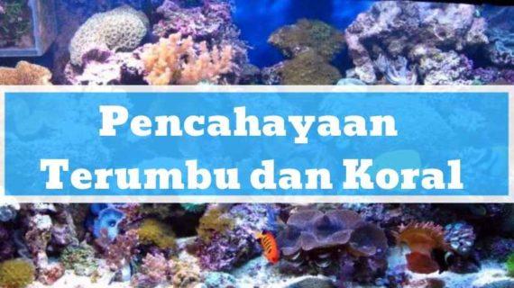 Pencahayaan Terumbu dan Koral di Aquarium Air Laut