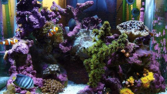 Ukuran Sebuah Aquarium Air Laut Jangan Diremehkan