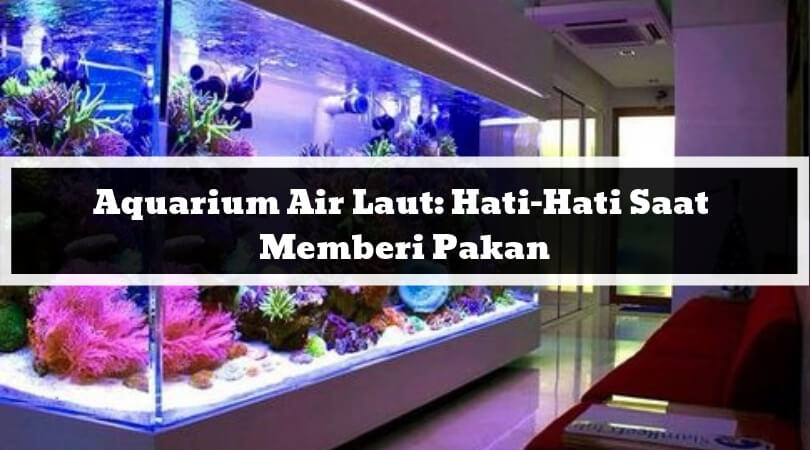 Aquarium Air Laut Hati-Hati Saat Memberi Pakan
