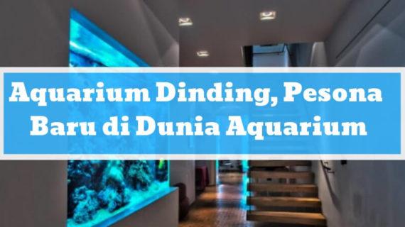 Aquarium Dinding, Pesona Baru di Dunia Aquarium