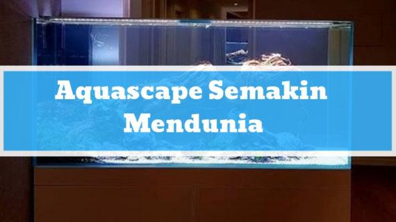 Aquascape Semakin Mendunia, Apakah Anda Sudah Tertarik?
