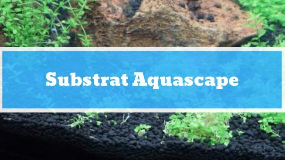 Substrat Aquascape : Tujuan, Fungsi dan Jenis-jenis