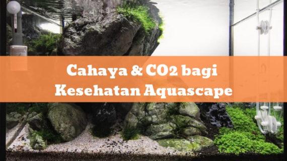 Cahaya & CO2 bagi Kesehatan Aquascape