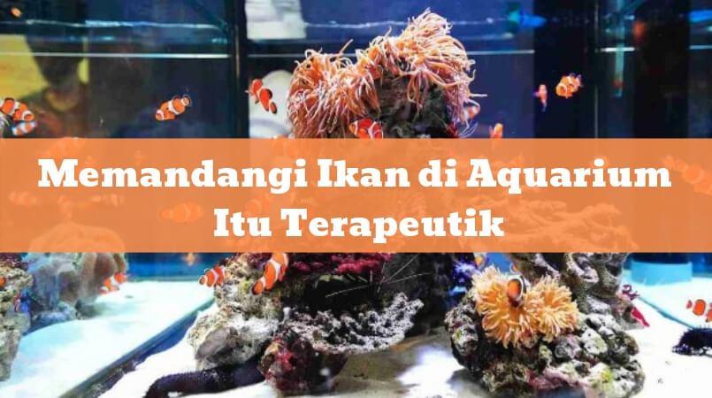 Memandangi Ikan di Aquarium Itu Terapeutik