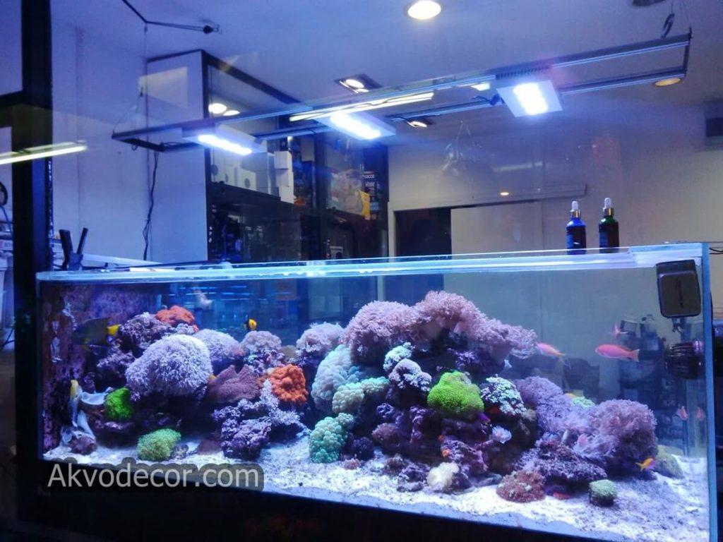 95+ Gambar Aquarium Air Laut Paling Keren