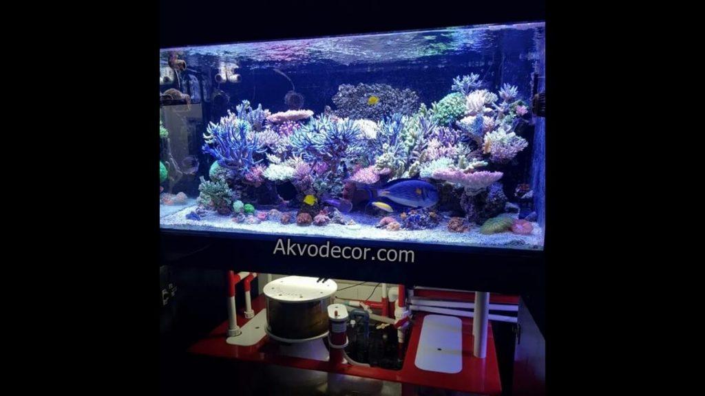 450 Koleksi Gambar Desain Akuarium Laut HD Terbaru Download Gratis