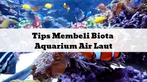 Tips Membeli Biota Aquarium Air Laut