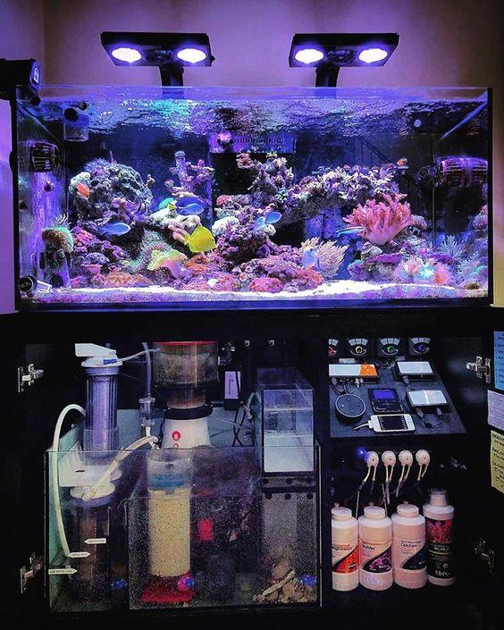 Tips Merawat Aquarium Air Laut