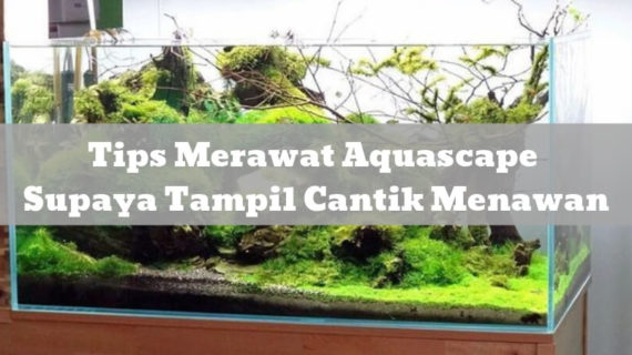 Tips Merawat Aquascape Supaya Tampil Cantik Menawan
