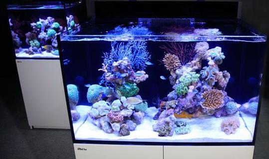 Beragam Jenis Ikan Hias di Pasar Ikan Aquarium Air Laut Bekasi