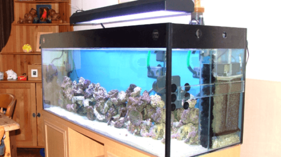 Pasar Ikan Aquarium Air Laut Depok Satu