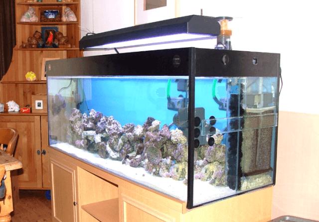 Aquarium Air Laut Depok