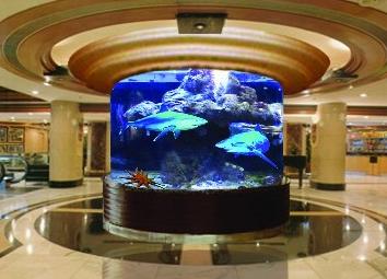 Aquarium Air Laut Ikan Hiu