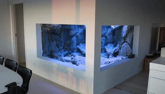 Beberapa Hal Yang Ditemui di Pasar Ikan Aquarium Air Laut Jakarta