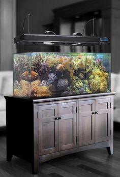 Aquarium dalam bufet