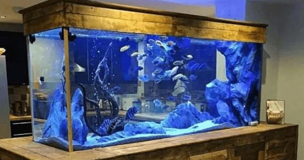 Aquarium menyerupai peti