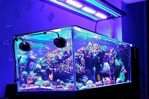 Beberapa Macam Ragam Alat Untuk Aquarium Air Laut