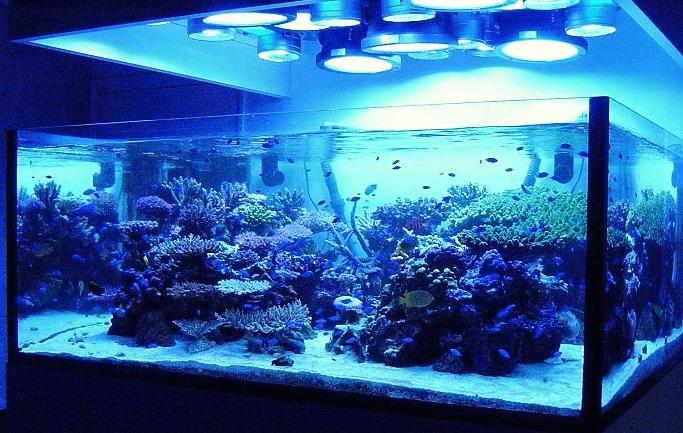 Bisnis Aquarium Air Laut