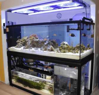 Skimmer Aquarium Air Laut