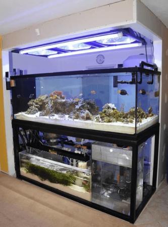 Skimmer Aquaium Air Laut (1)