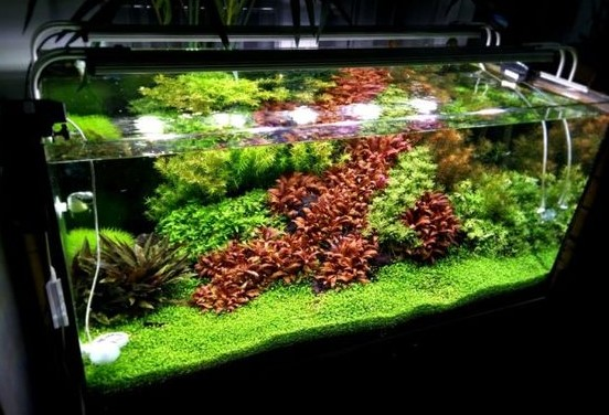 Jasa Maintenance Aquascape