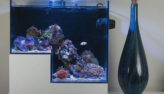 Jasa Pembuatan Aquarium Air Laut