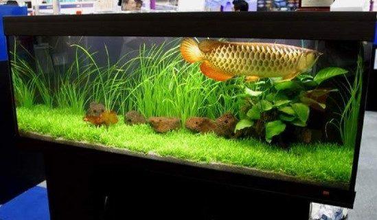 Memilih Jasa Pembuatan Aquarium Arwana Jakarta Online