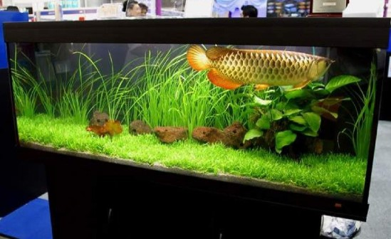 Jasa Pembuatan Aquarium Arwana Jakarta