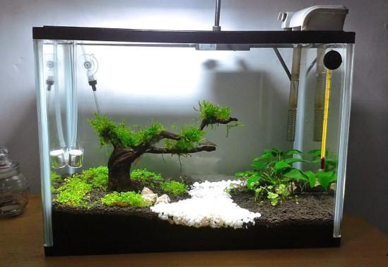 Jenis Aquarium Air Laut - Kapasitas Filter & Kesimpulan