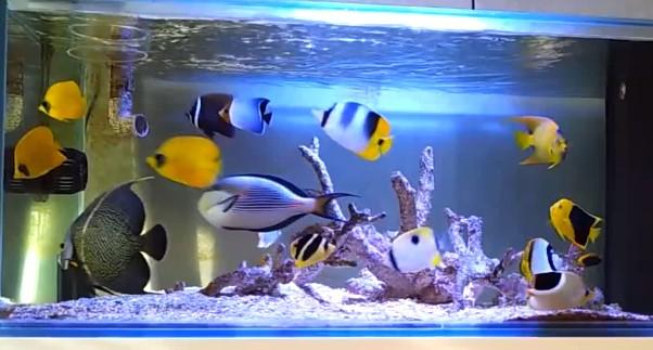 Jenis Aquarium Air Laut - Perbedaan Aquarium Laut Fish Only & Aquarium Laut Koral