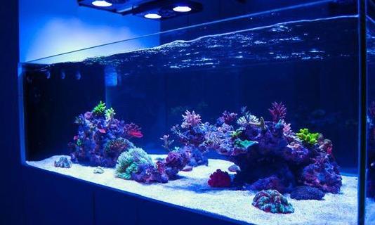 Jual Aquarium Air Laut