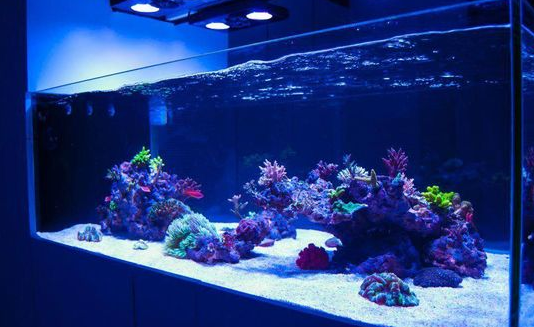 Jual Aquarium Air Laut