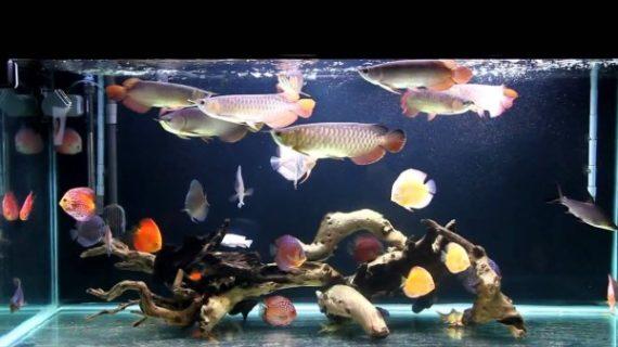 Tips Pra Bisnis Jual Aquarium Arwana Jakarta