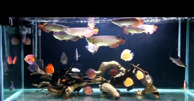 Jual Aquarium Arwana Jakarta
