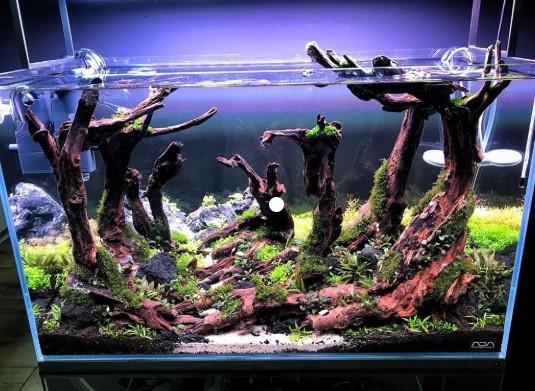 Jasa Pembuatan Aquascape Di Jakarta