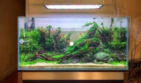 Jasa Setting Aquascape