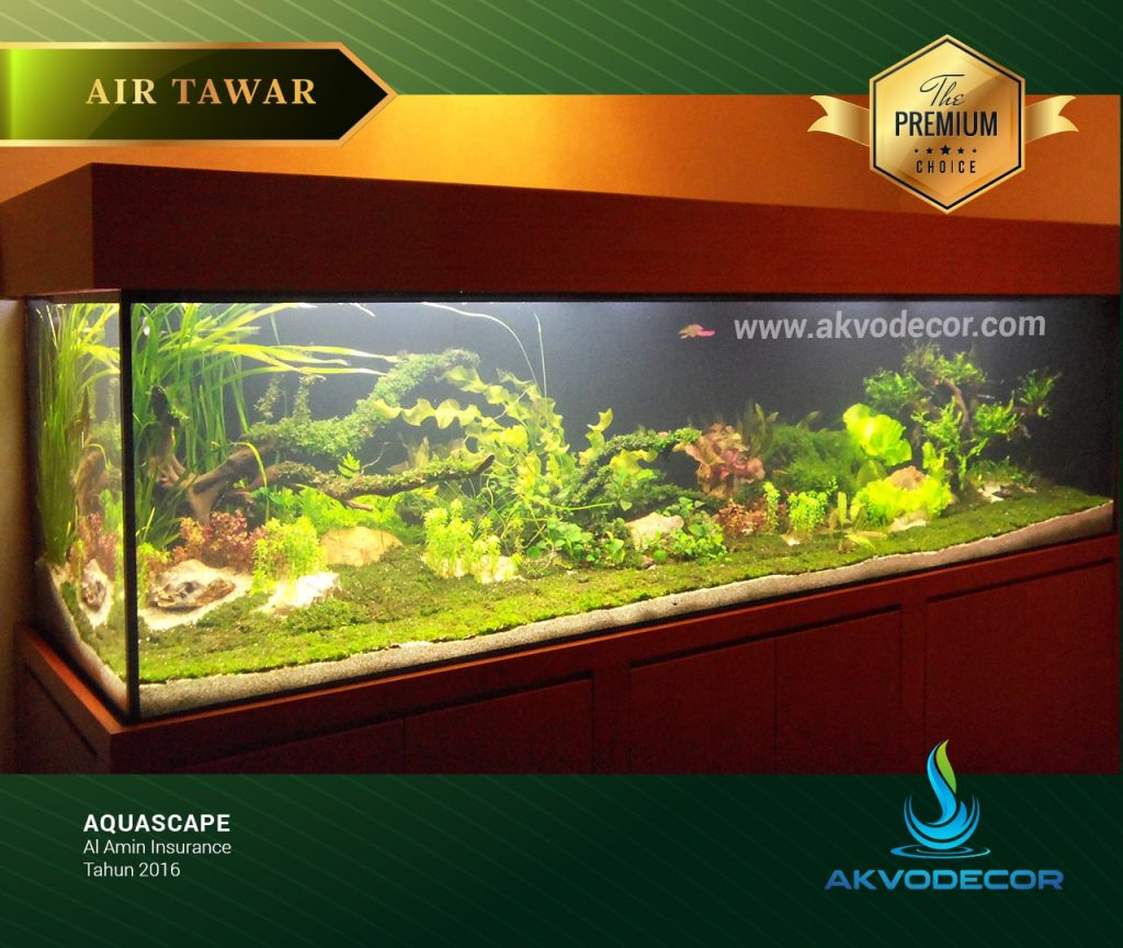 Galeri Desain Aquarium Air Tawar Aquascape Akvodecor