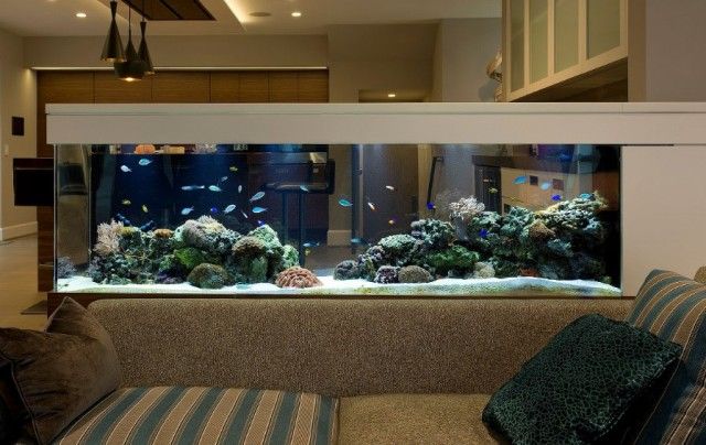 Cara Mengatur Kadar Garam Aquarium Air Laut